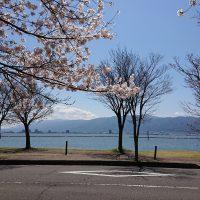 諏訪湖と桜